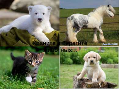 Храните и берегите животных…