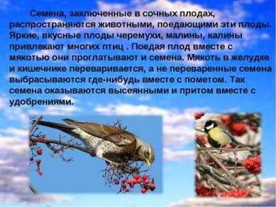 . Семена, заключенные в сочных плодах, распространяются животными, поедающими...