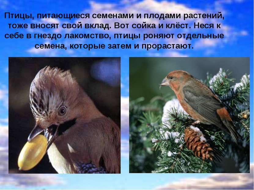 Птицы, питающиеся семенами и плодами растений, тоже вносят свой вклад. Вот со...