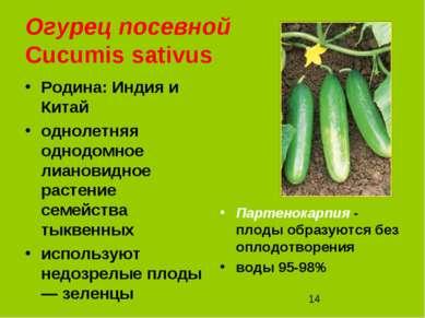 Огурец посевной Cucumis sativus Родина: Индия и Китай однолетняя однодомное л...