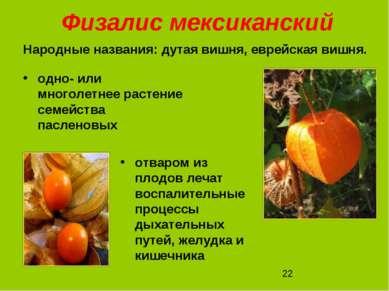 Физалис мексиканский одно- или многолетнее растение семейства пасленовых отва...