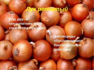 Лук репчатый род дву- и многолетних трав семейства луковых фитонциды обусловл...