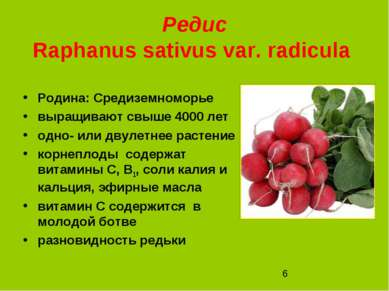 Редис Raphanus sativus var. radicula Родина: Средиземноморье выращивают свыше...