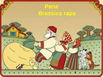 Репа Brassica rapa