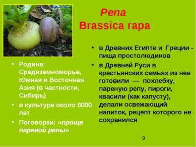 Репа Brassica rapa Родина: Средиземноморье, Южная и Восточная Азия (в частнос...