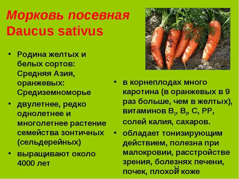 Морковь посевная Daucus sativus Родина желтых и белых сортов: Средняя Азия, о...