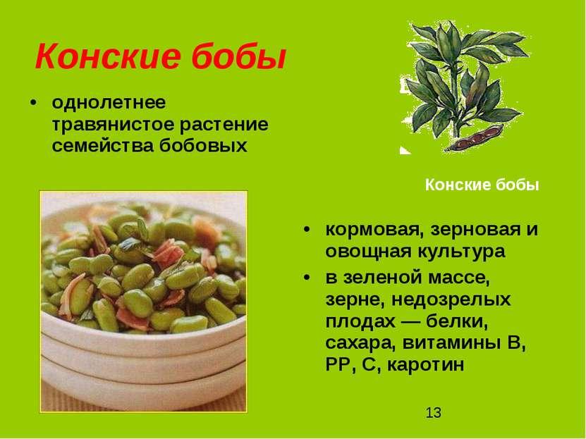 Конские бобы однолетнее травянистое растение семейства бобовых кормовая, зерн...