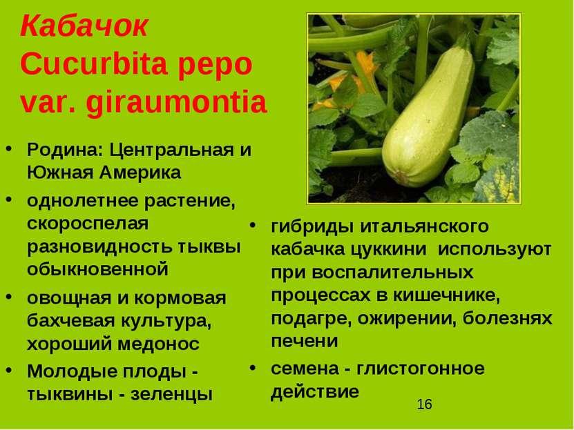 Кабачок Cucurbita pepo var. giraumontia Родина: Центральная и Южная Америка о...