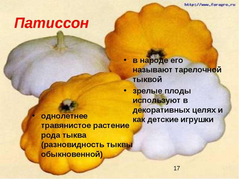 Патиссон однолетнее травянистое растение рода тыква (разновидность тыквы обык...