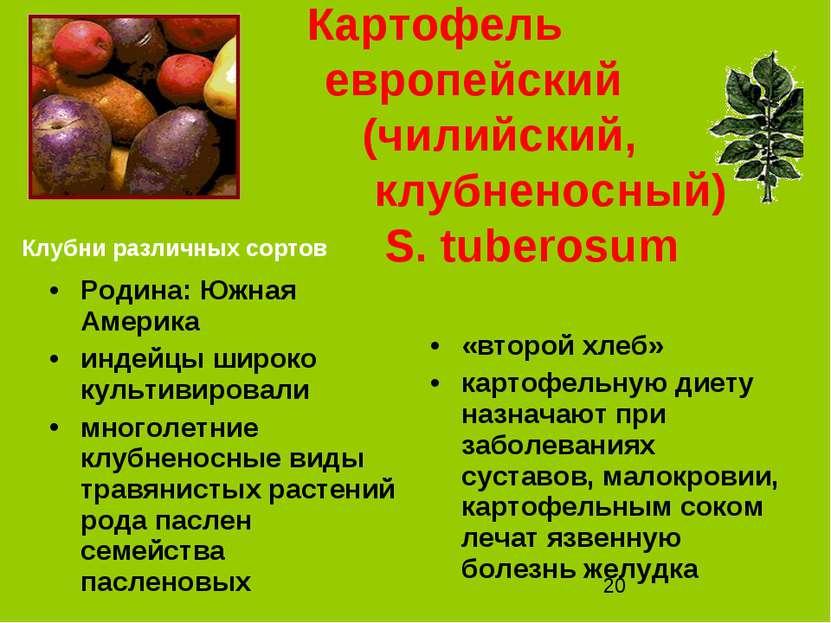 Картофель европейский (чилийский, клубненосный) S. tuberosum Родина: Южная Ам...