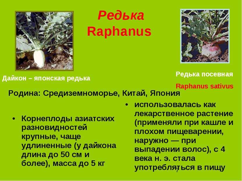 Редька Raphanus Корнеплоды азиатских разновидностей крупные, чаще удлиненные ...