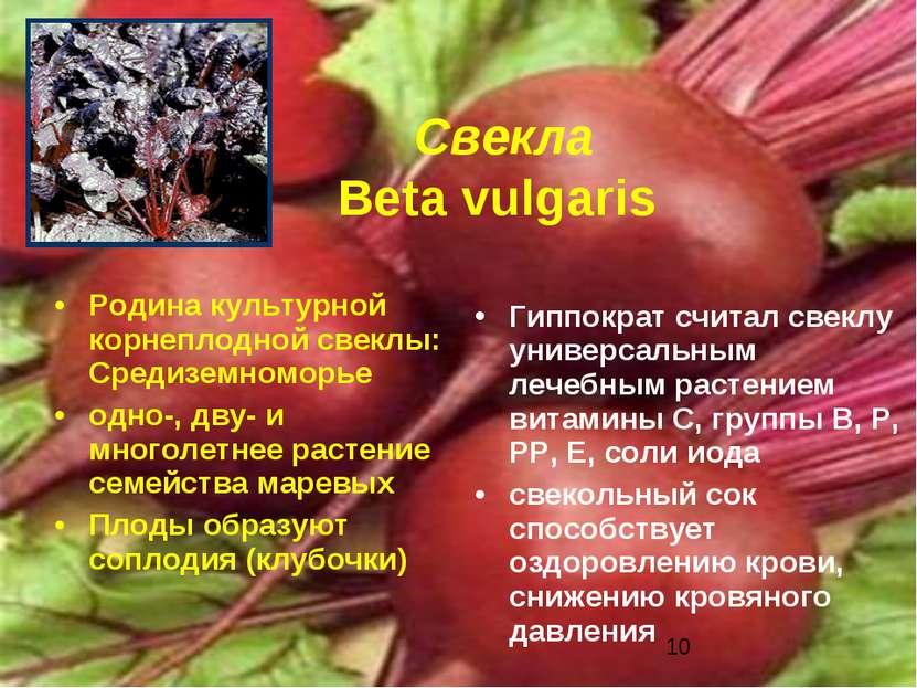 Свекла Beta vulgaris Родина культурной корнеплодной свеклы: Средиземноморье о...
