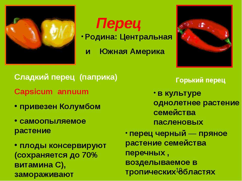 Перец перец черный — пряное растение семейства перечных , возделываемое в тро...
