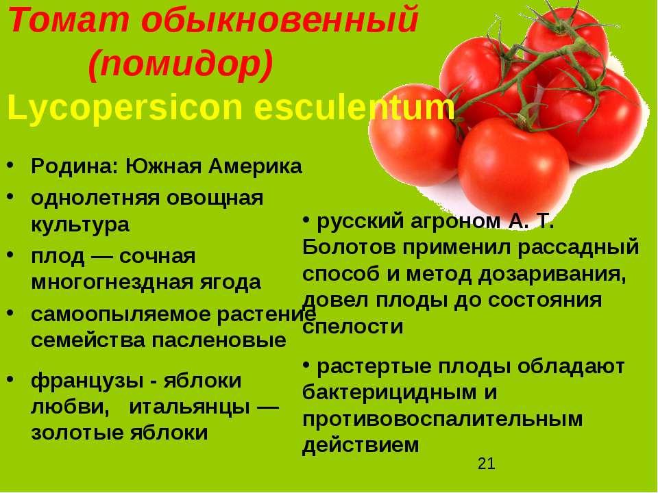 Томат обыкновенный (помидор) Lycopersicon esculentum Родина: Южная Америка од...