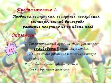 Предположение 1. Названия «голубика», «голубец», «голубица», «синика», «синий...