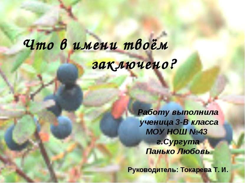 Цель исследования: Работу выполнила ученица 3-В класса МОУ НОШ №43 г.Сургута ...