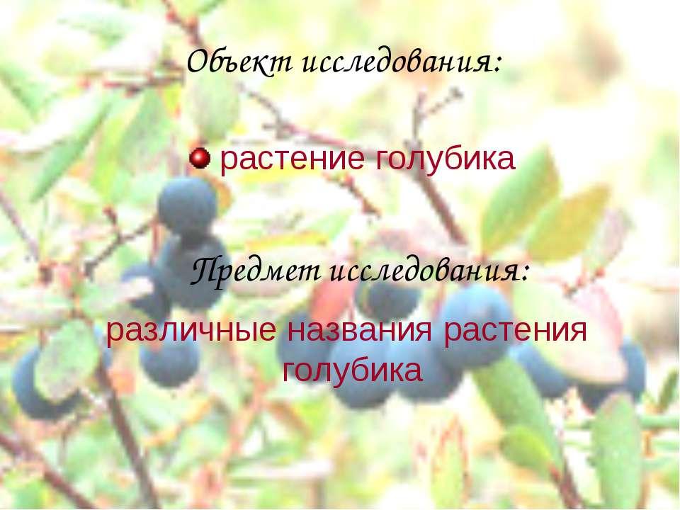 Объект исследования: Предмет исследования: растение голубика различные назван...