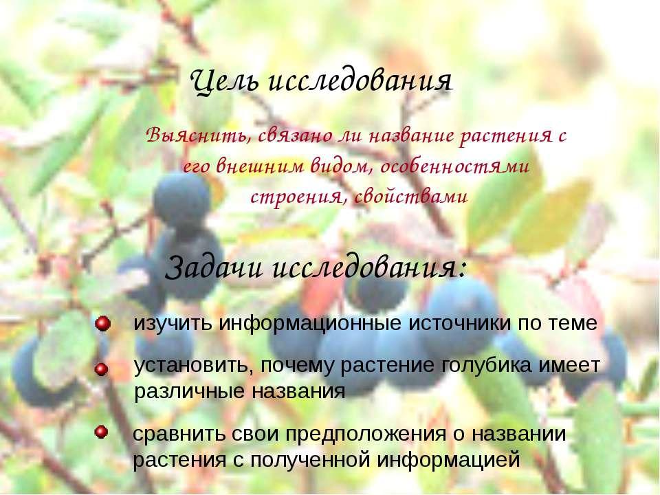 Цель исследования Задачи исследования: Выяснить, связано ли название растения...
