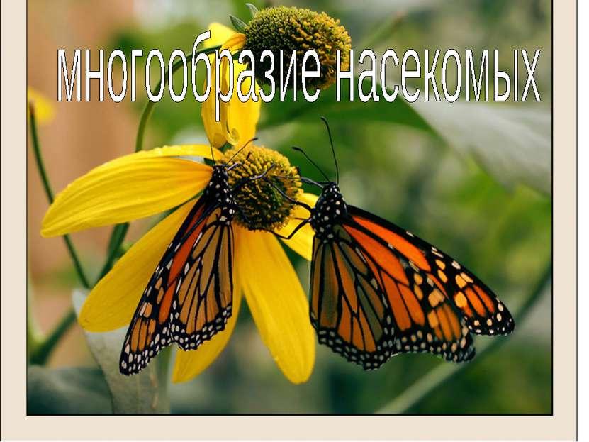 Многообразие насекомых Отряды: Чешуекрылые Двукрылые Равнокрылые Блохи