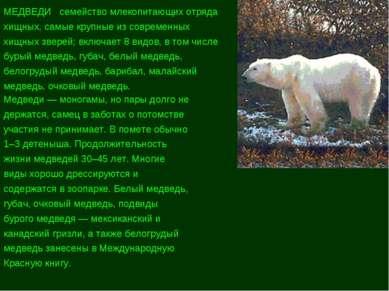 МЕДВЕДИ семейство млекопитающих отряда хищных, самые крупные из современных х...