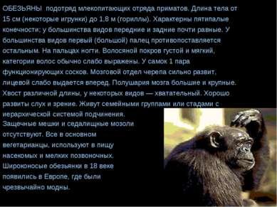 ОБЕЗЬЯНЫ подотряд млекопитающих отряда приматов. Длина тела от 15 см (некотор...