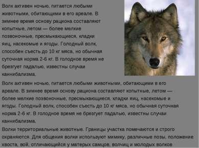 Волк активен ночью, питается любыми животными, обитающими в его ареале. В зим...