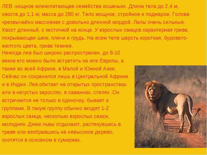 ЛЕВ -хищное млекопитающее семейства кошачьих. Длина тела до 2,4 м, хвоста до ...