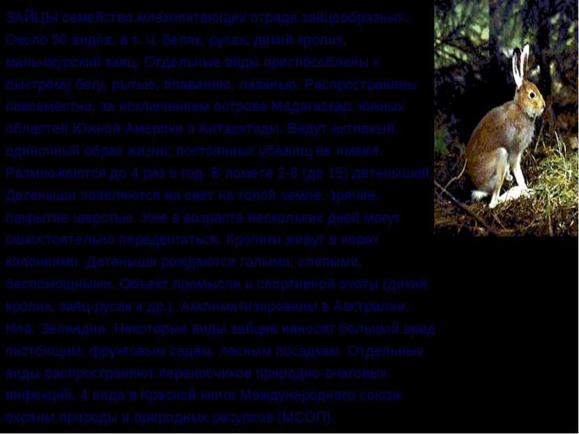 ЗАЙЦЫ семейство млекопитающих отряда зайцеобразных. Около 50 видов, в т. ч. б...