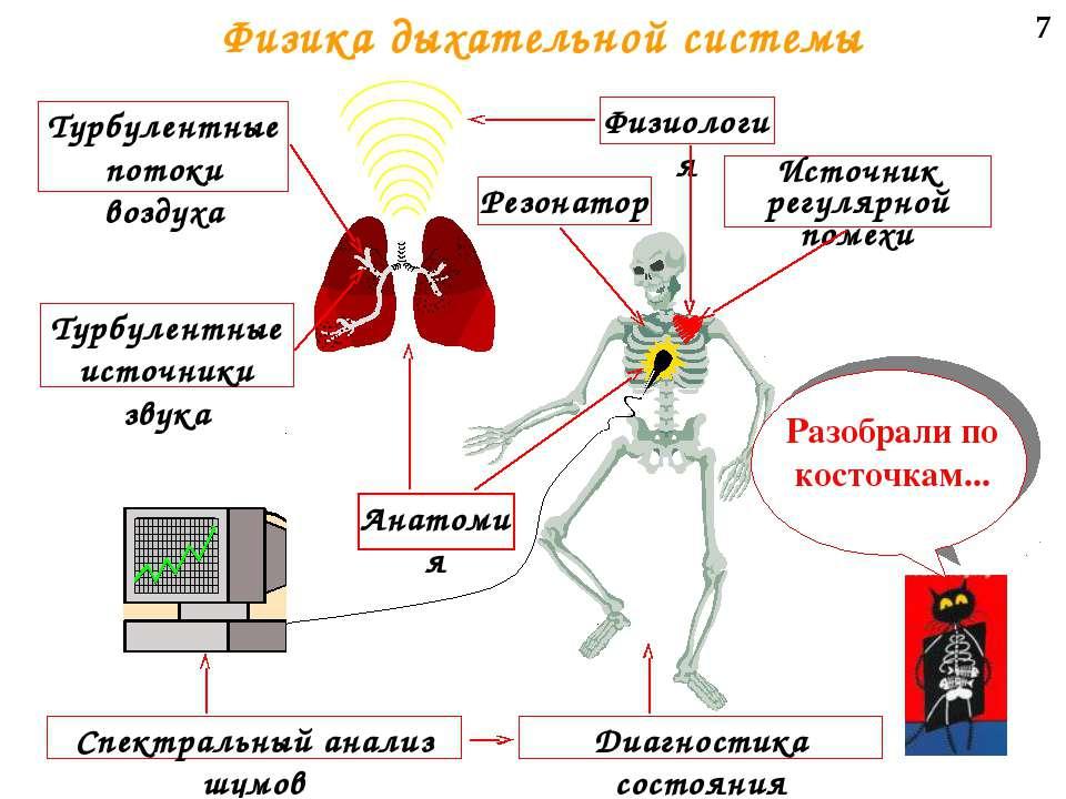 7 Физика дыхательной системы