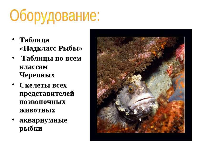Таблица «Надкласс Рыбы» Таблицы по всем классам Черепных Скелеты всех предста...
