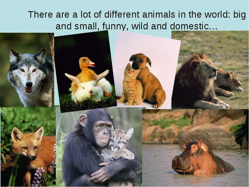 There are a lot of different animals in the world: big and small, funny, wild...