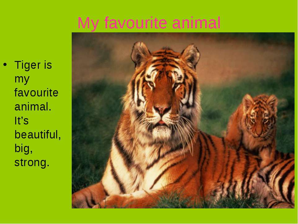 My favourite animal Tiger is my favourite animal. It's beautiful, big, strong.
