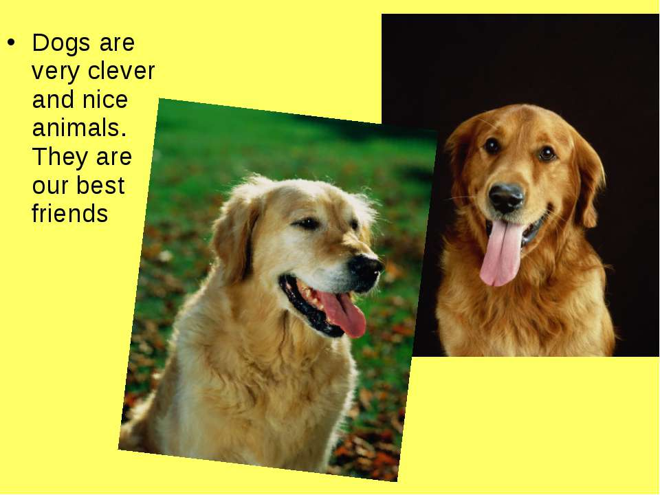 Dogs are very clever and nice animals. They are our best friends