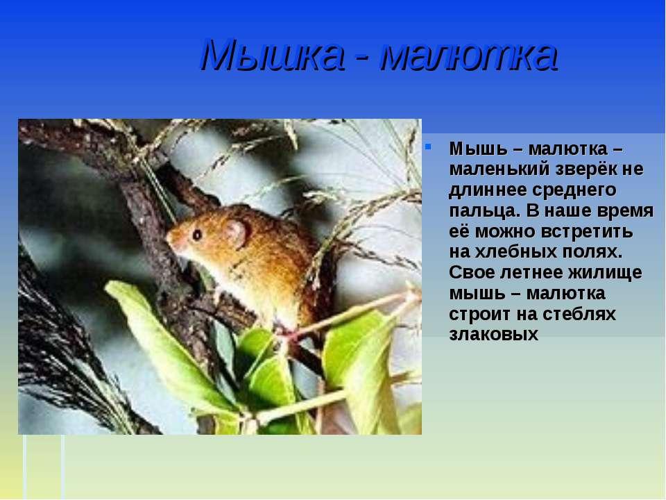 Мышка - малютка Мышь – малютка – маленький зверёк не длиннее среднего пальца....