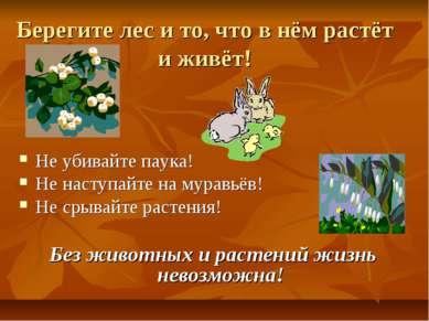 Берегите лес и то, что в нём растёт и живёт! Не убивайте паука! Не наступайте...