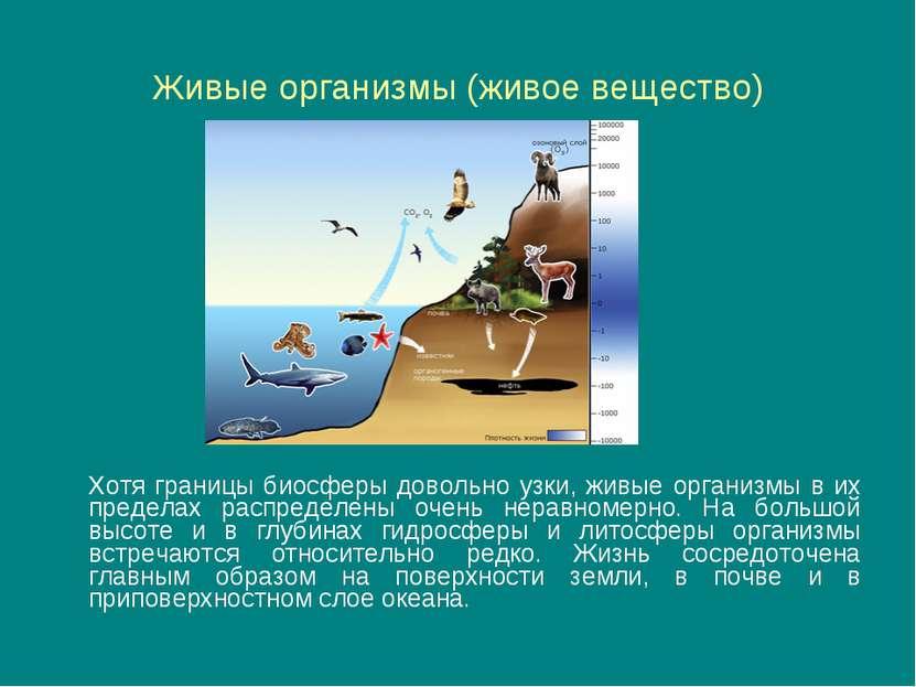 Живые организмы (живое вещество) Хотя границы биосферы довольно узки, живые о...