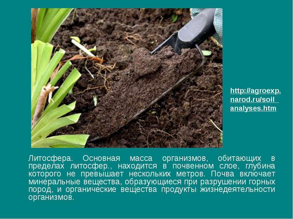 Литосфера. Основная масса организмов, обитающих в пределах литосфер., находит...