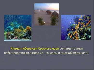 Климат побережья Красного моря считается самым неблагоприятным в мире из –за ...
