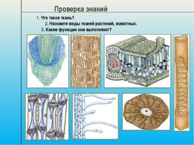 Проверка знаний 1. Что такое ткань? 2. Назовите виды тканей растений, животны...