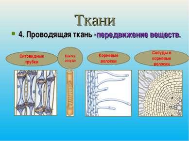 Ткани 4. Проводящая ткань -передвижение веществ. Ситовидные трубки Корневые в...