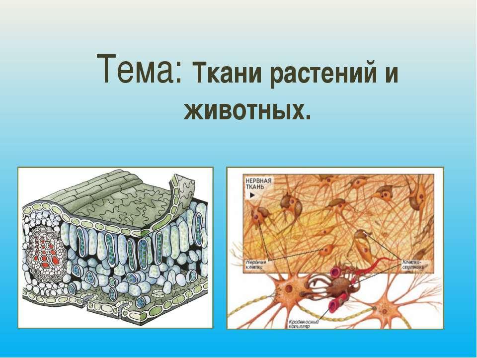 Тема: Ткани растений и животных.