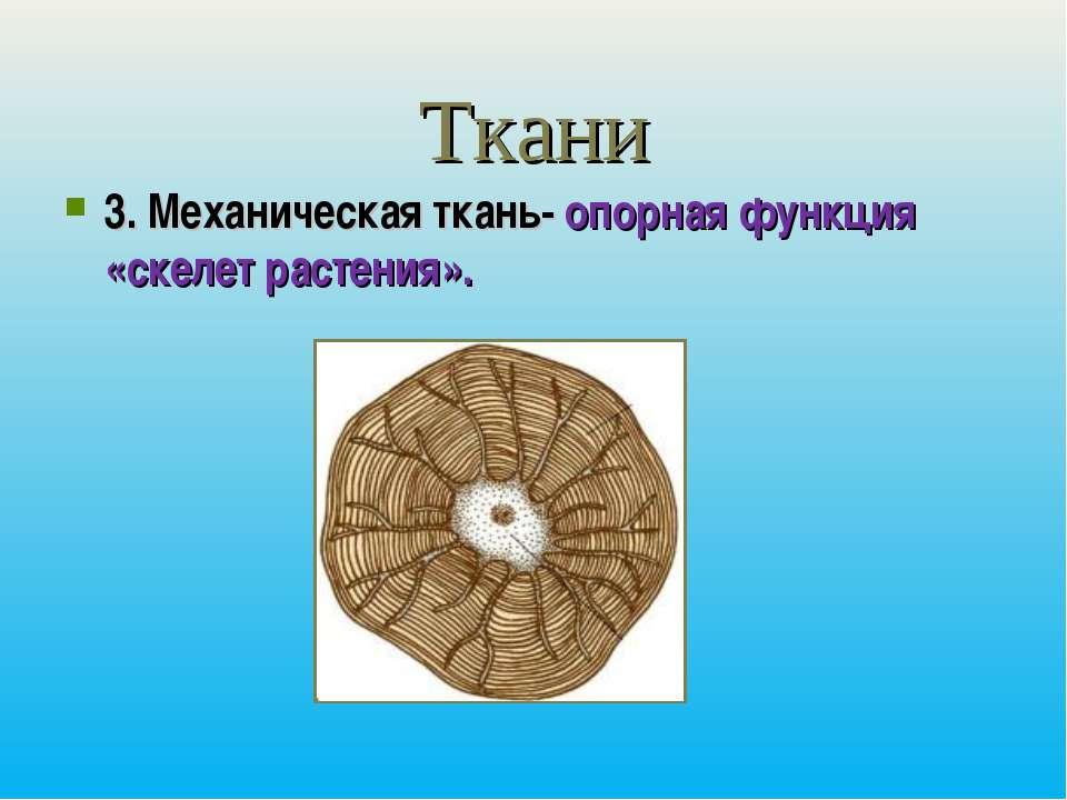 Ткани 3. Механическая ткань- опорная функция «скелет растения».