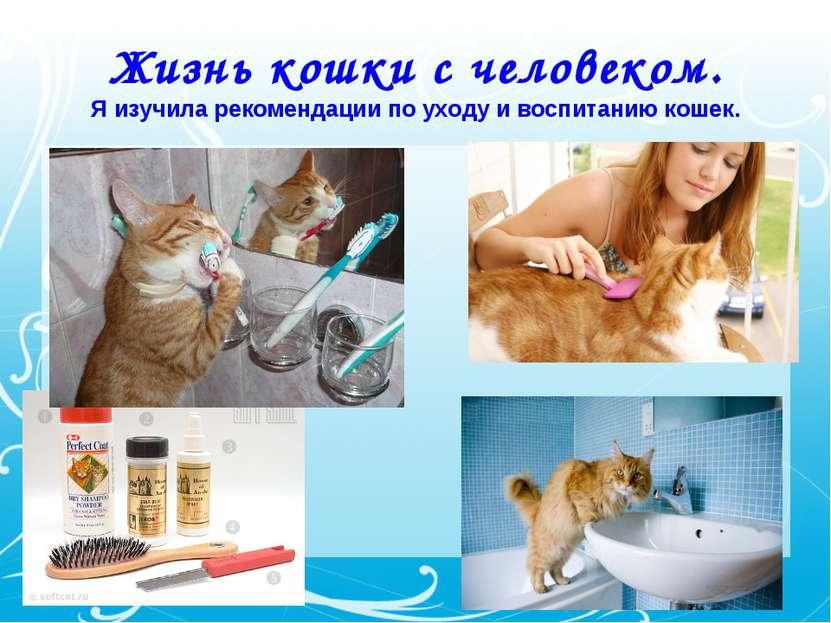 Жизнь кошки с человеком. Я изучила рекомендации по уходу и воспитанию кошек.