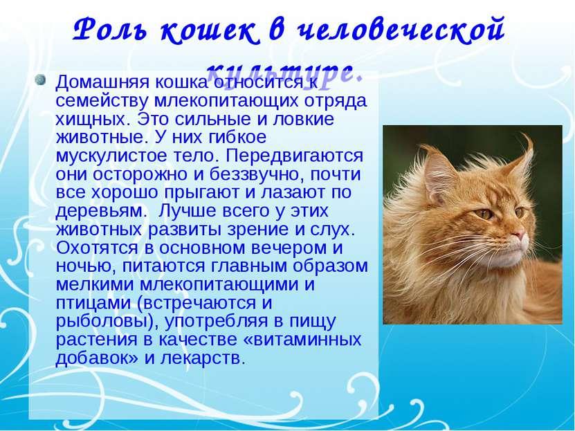 Роль кошек в человеческой культуре. Домашняя кошка относится к семейству млек...
