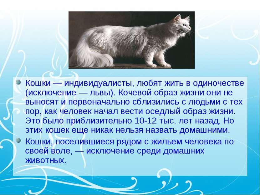 Кошки — индивидуалисты, любят жить в одиночестве (исключение — львы). Кочевой...