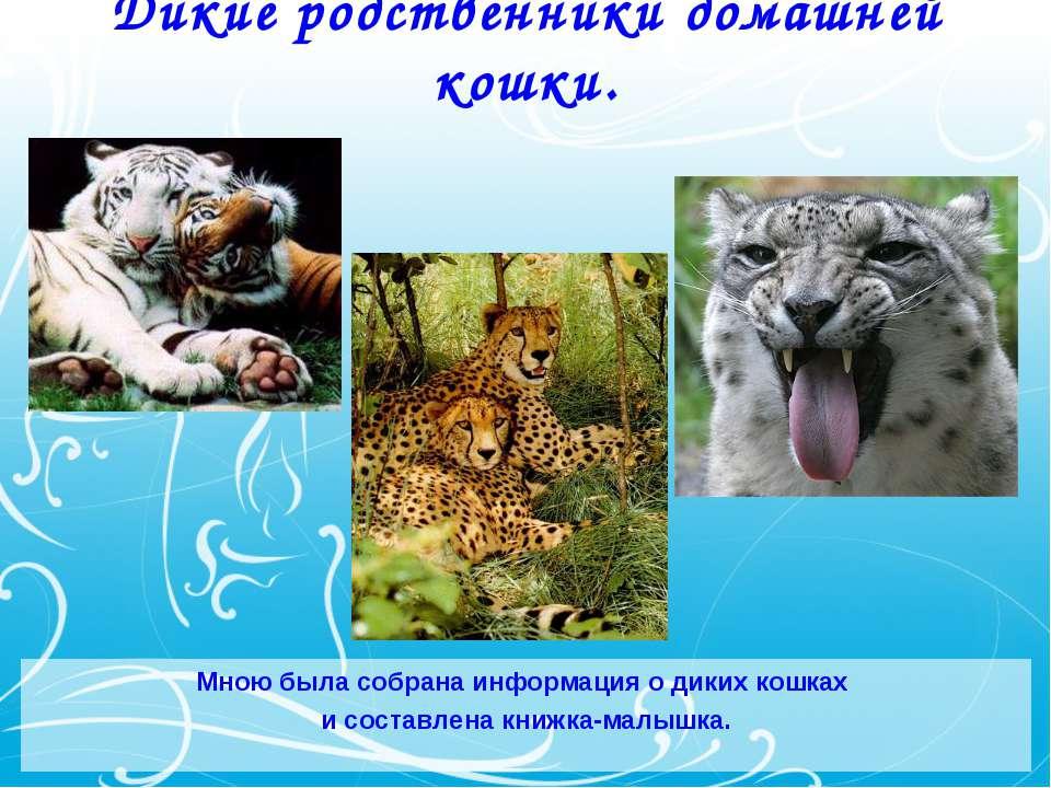 Дикие родственники домашней кошки. Мною была собрана информация о диких кошка...