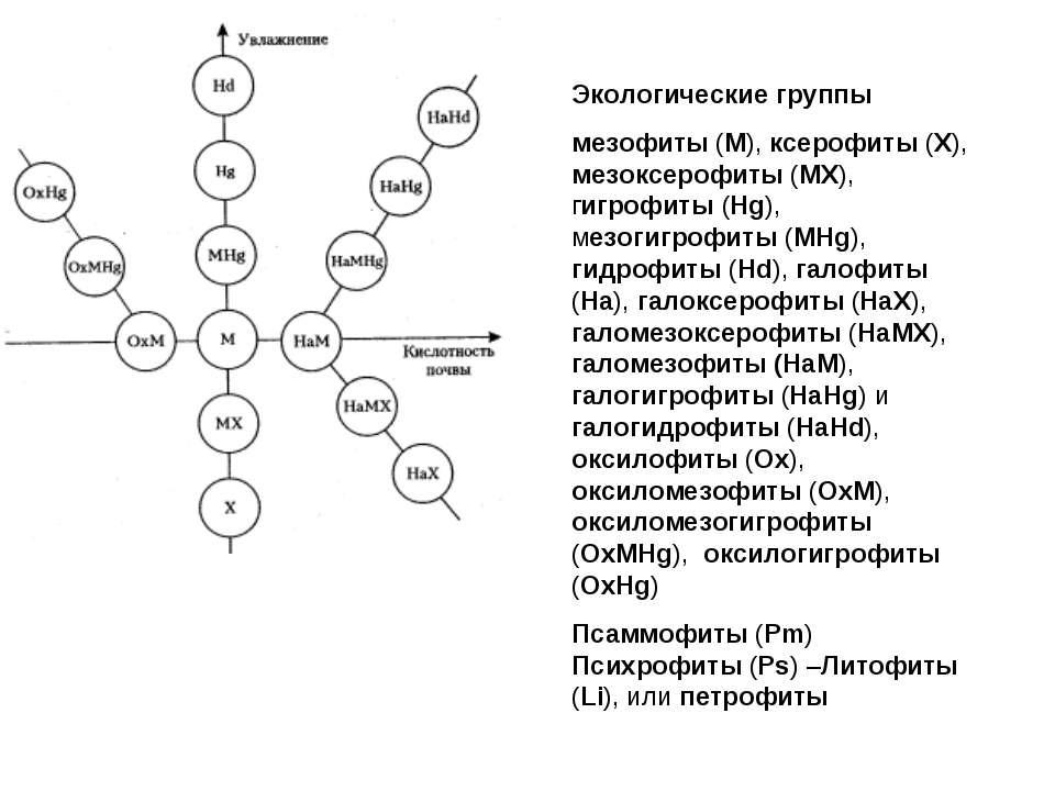Экологические группы мезофиты (М), ксерофиты (X), мезоксерофиты (MX), гигрофи...