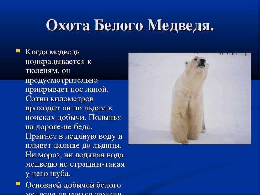 как живут белые медведи видео для первого класса