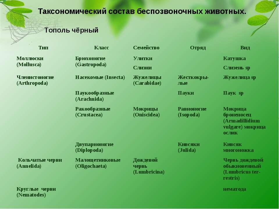 Таксономический состав беспозвоночных животных. Тополь чёрный Тип Класс Семей...