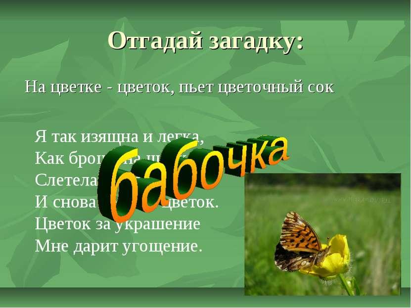 Отгадай загадку: На цветке - цветок, пьет цветочный сок Ятак изящна илегка,...